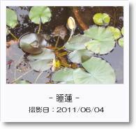 - 季節の花 - 睡蓮