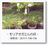 - 季節の花 - モリアオガエルの卵