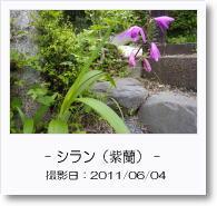- 季節の花 - シラン