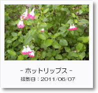 - 季節の花 - ホットリップス