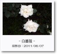 - 季節の花 - 白薔薇