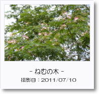 - 季節の花 - ねむの木