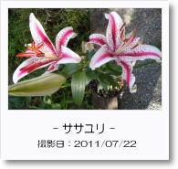 - 季節の花 - ササユリ