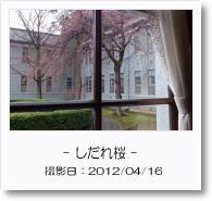 - 季節の花 - しだれ桜