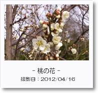 - 季節の花 - 桃の花