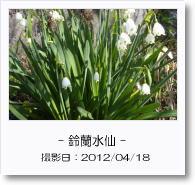 - 季節の花 - 鈴蘭水仙