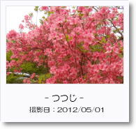- 季節の花 - つつじ