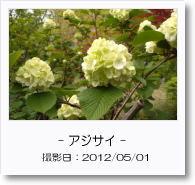 - 季節の花 - アジサイ