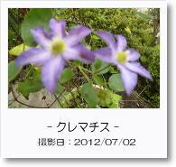 - 季節の花 - クレマチス