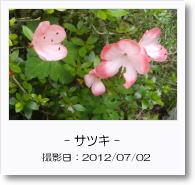 - 季節の花 - サツキ