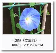 - 季節の花 - 朝顔