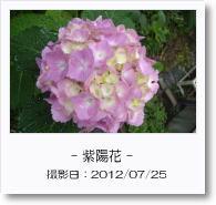 - 季節の花 - 紫陽花