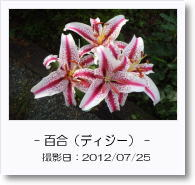 - 季節の花 - ディジー