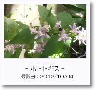 - 季節の花 - ホトトギス