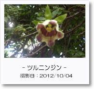 - 季節の花 - ツルニンジン
