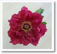 - 季節の花 -